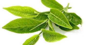 tác dụng của việc uống trà xanh hàng ngày
