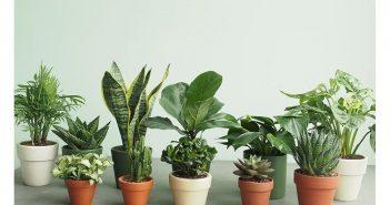 Những loại cây cảnh hợp phong thủy cho người tuổi Tân Tỵ (2001)