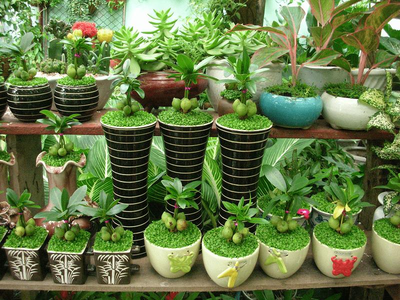 Có nên trồng cây giả trong nhà hay không?