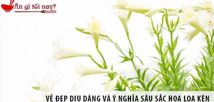 Vẻ đẹp dịu dàng và ý nghĩa sâu sắc hoa loa kèn