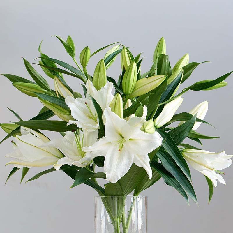 Có thể tặng hoa loa kèn cho cha mẹ ngày sinh nhật